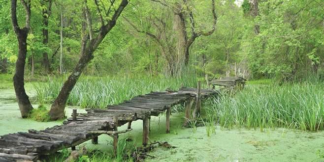 Karacabey Longoz Ormanları turizme kazandırılıyor