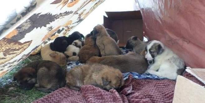 Orhangazi'de 53 yavru köpeğe belediye sahip çıktı