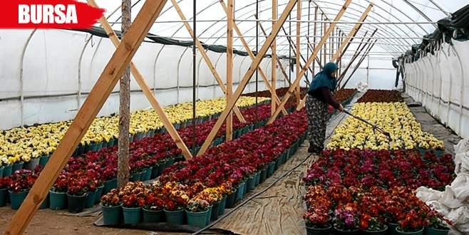 Başköylü kadınlar mermer ocağını kapattırdı, çiçek yetiştiriyor