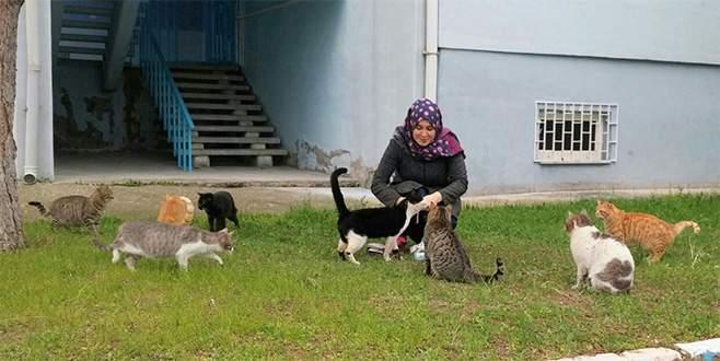 Devlet bursuyla sahipsiz kedilere bakıyor