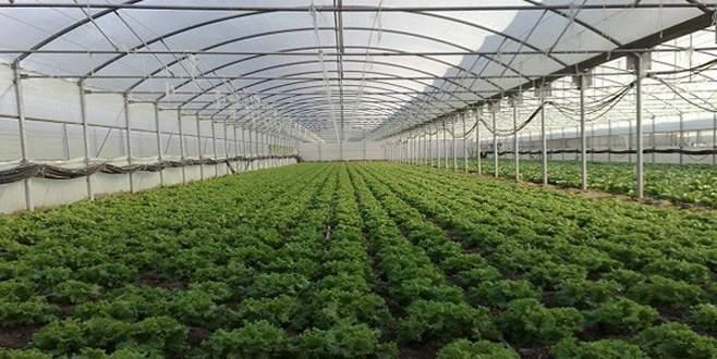 Örtü altı tarım üretiminde artış