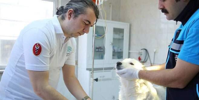Nilüfer'den can dostlarına beş yıldızlı sağlık hizmeti