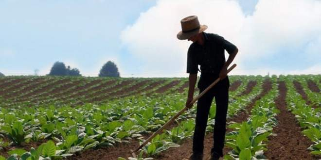 Genç çiftçilere 30 bin liraya kadar hibe desteği