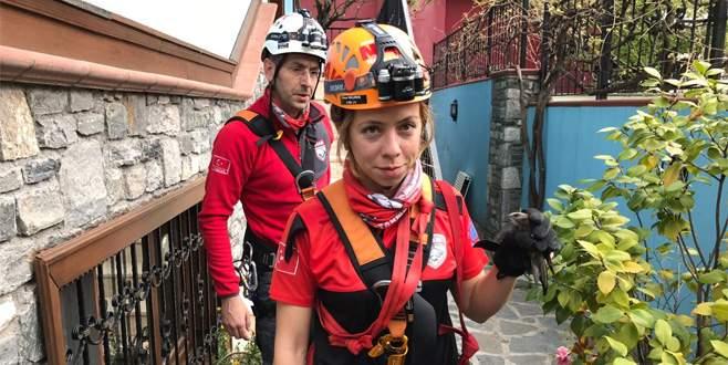 Bursa'da çatı oluğuna kanadı sıkışan kırlangıç kurtarıldı