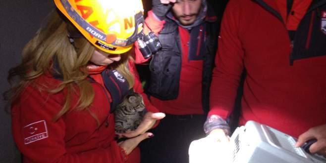 Bursa'da su borusuna sıkışan yavru kediler böyle kurtarıldı