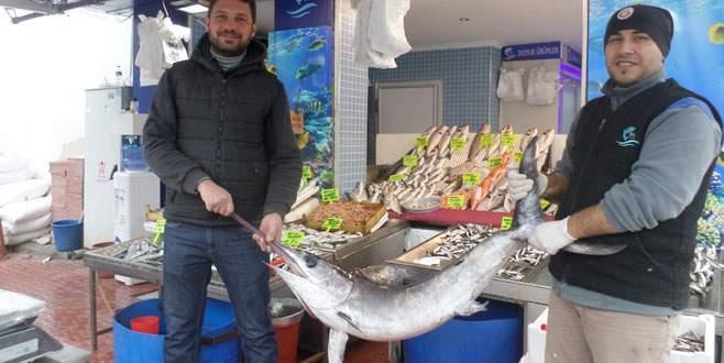 Mudanyalı balıkçıların ağlarına dev kılıç balığı takıldı