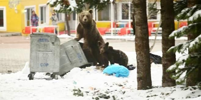 Bursa'da kış uykusundan uyanan ayı ailesi böyle görüntülendi