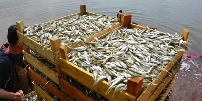 İznik Gölü'nde gümüş balığı sezonu açıldı