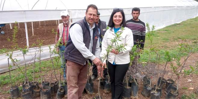 Nilüfer Belediyesi, üreticiye meyve fidanı dağıttı