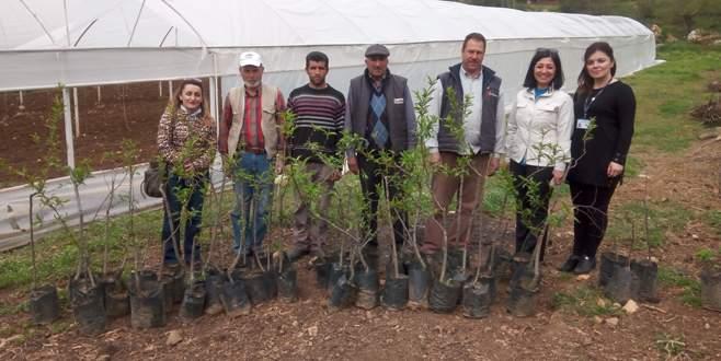 Nilüfer Belediyesi'nden üreticiye meyve fidanı