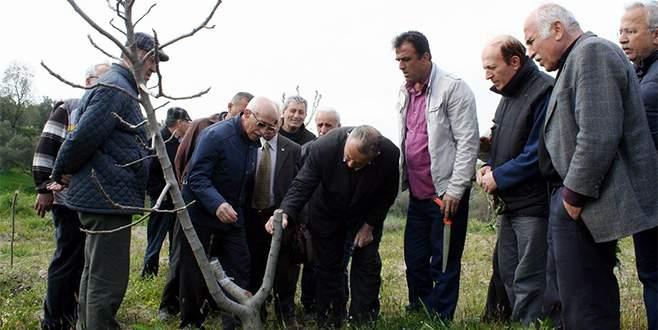 Bursalı incir üreticilerine budama eğitimi