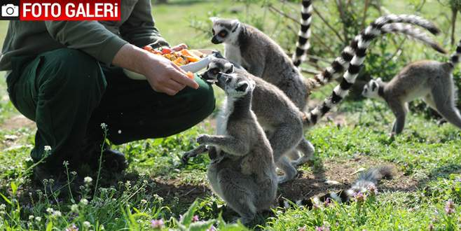 Bursa Hayvanat Bahçesi yavrularla şenlendi