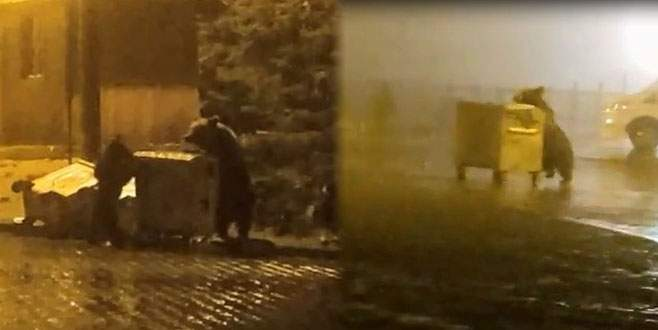 Aç kalan ayılar Uludağ'da böyle görüntülendi