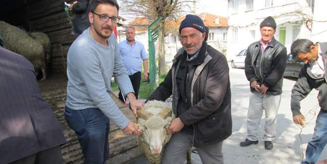 Büyükorhan'da damızlık koç desteği