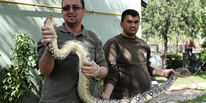 Dev yılana nefes kesen uçuk operasyonu