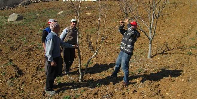 Büyükorhan'da çiftçiye uygulamalı eğitim