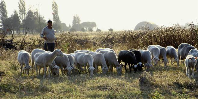 Hayvancılık için kıraç arazilere mera önerisi
