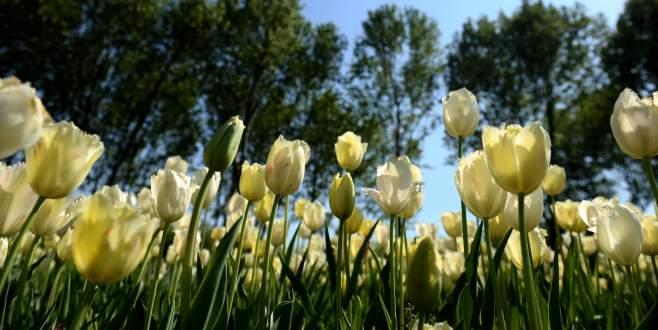 Bursa'da bahar coşkusu böyle kaydedildi