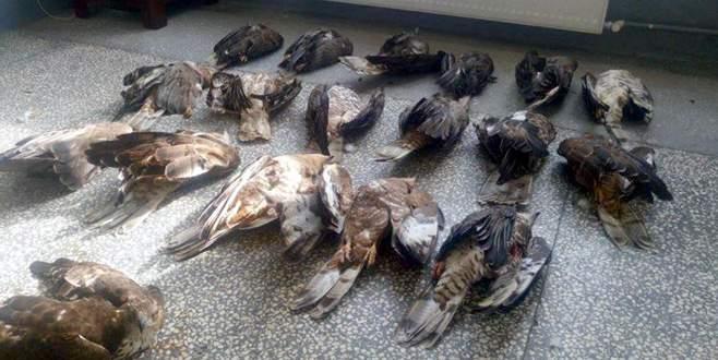 18 kartal avlayan avcıya büyük ceza