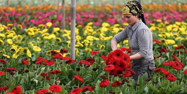 Çiçek ihracatına 'Anneler Günü' dopingi