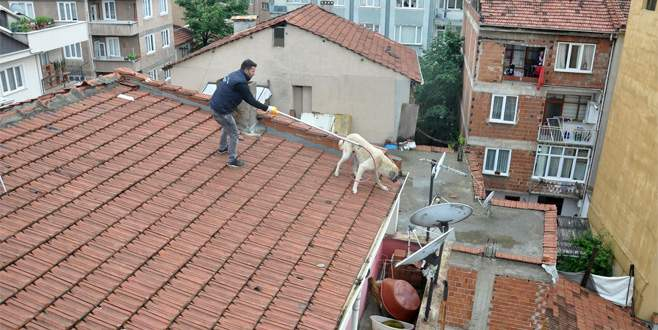 Mahsur kalan köpek için seferberlik