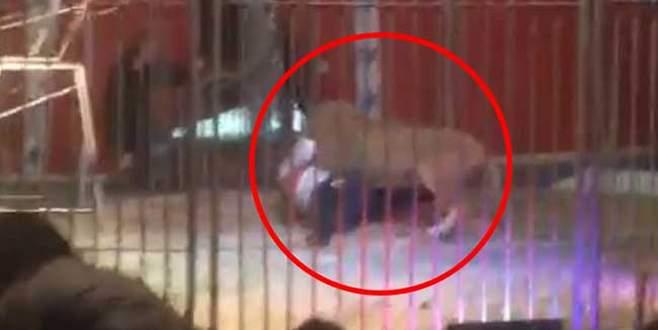 Aslan, terbiyecisine saldırdı