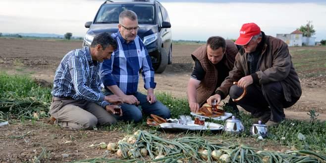 Özkan çiftçilerle tarlada soğan topladı