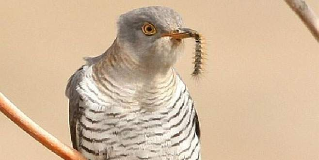Bursa'da bir günde 106 kuş türü görüldü