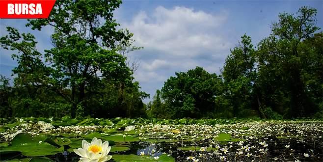 Karacabey Longozu'nda baharın eşsiz güzelliği