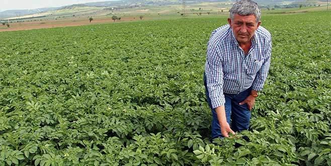 Çiftçi 'sarı lira'dan umutlu