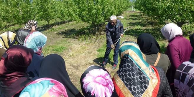 Gürsu'da kadın kursiyerlere budama ve aşılama eğitimi