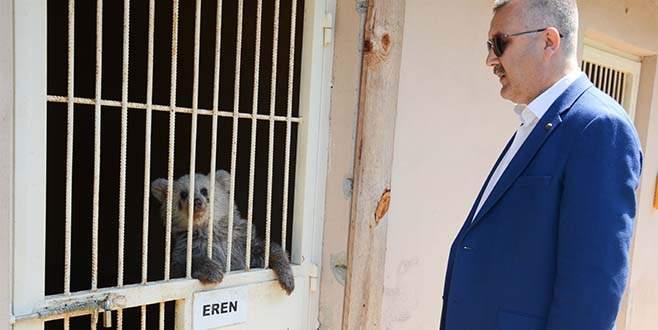 Karacabey, yavru ayıya sahip çıktı