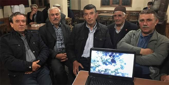 Bursa'da kirazlarını yiyen ayıyı mahkemeye vermekle tehdit etti