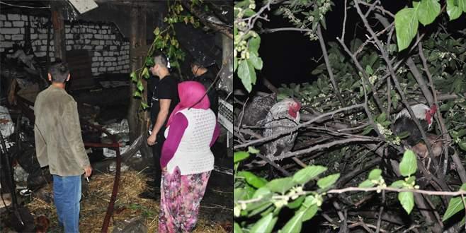 Bursa'da yangın! Kaçan tavuklar ağaca çıktı
