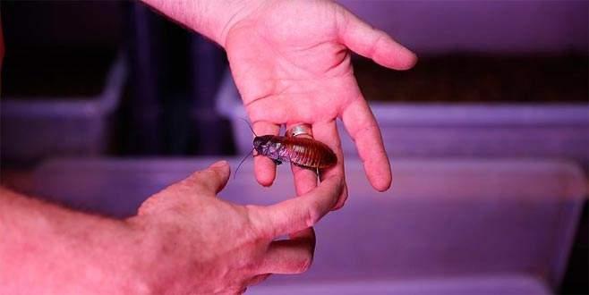 Hamam böceğinin tanesini 4 liradan satıyor