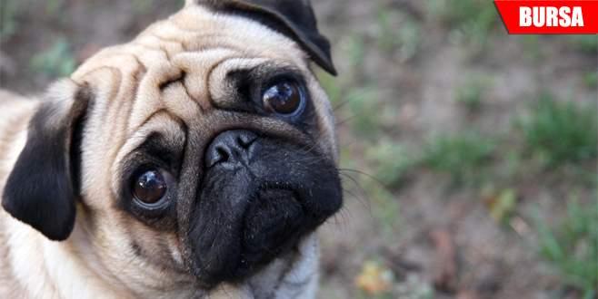 İnternetten köpek almak isterken dolandırıldı