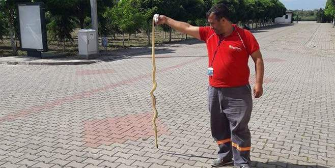 Bursa'da okul bahçesinde yılan alarmı