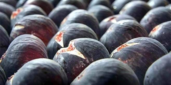 Bursa siyah inciri dünyaya açılıyor