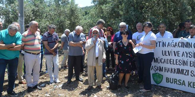 Mudanya'da zeytin düzenlemesine tepki
