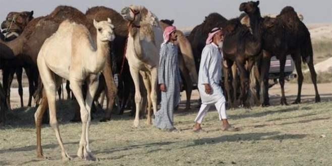 Sıra develere geldi