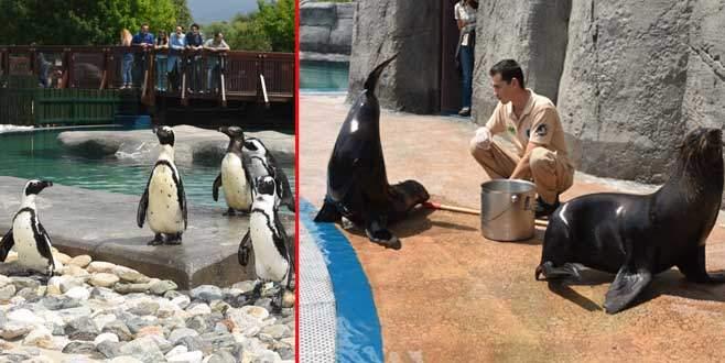 Bursa Zoo'nun yeni misafirleri