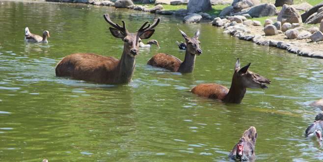 Bursa'da sıcaktan bunalan hayvanlar böyle serinledi