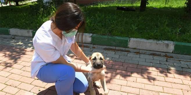 Kanlar içinde bulunan köpek hayata döndürüldü
