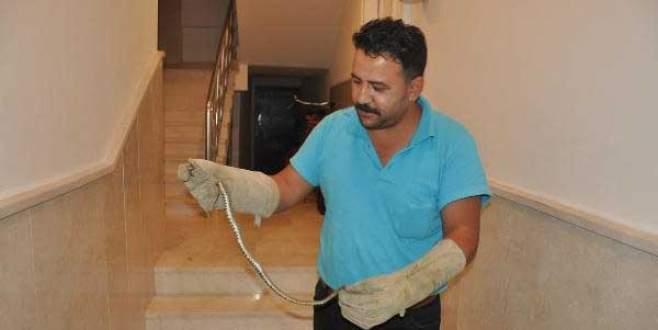İnegöl'de apartmana giren yılan korkuttu