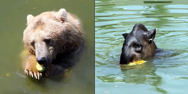 Bursa Hayvanat Bahçesi'nde hayvanlar böyle serinliyor
