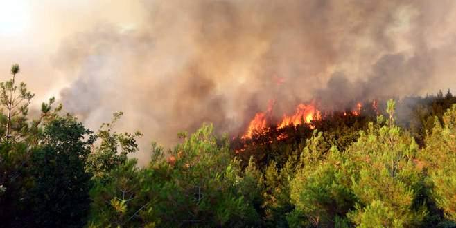 Çanakkale'deki orman yangınında rüzgar endişesi