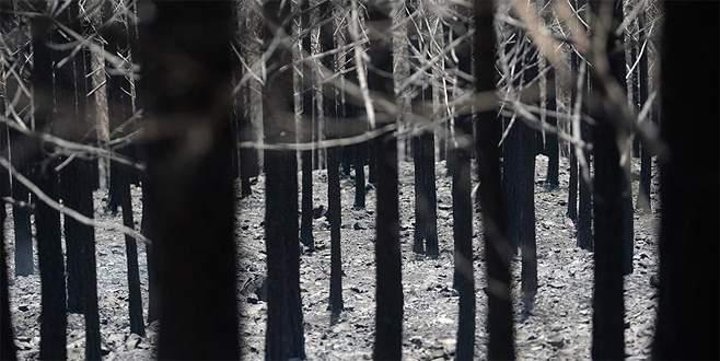 Antalya ormanları 8 ayrı noktadan yandı