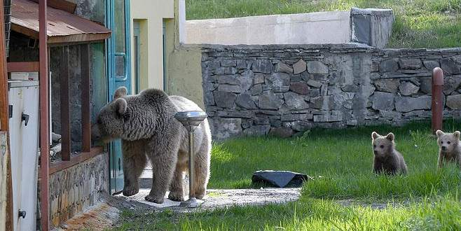 Yiyecek arayan ayı eve girdi