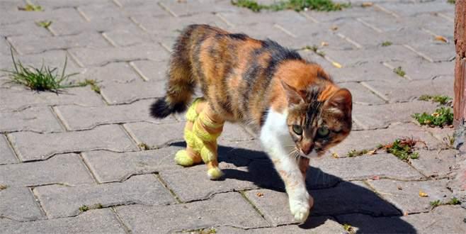 Protez bacakları ile ilk adımını attı
