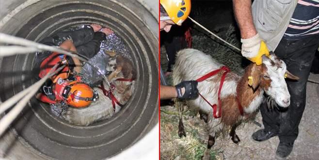 Kuyuya düşen 2 keçiyi NAK kurtardı
